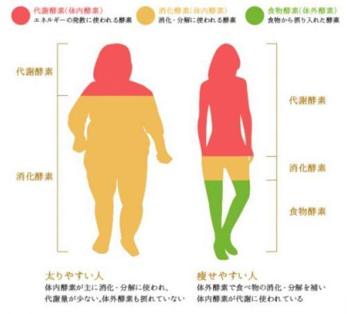 脂肪が燃えやすい今からスタート♡《寒さを味方にした》秋ダイエットの画像