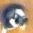 記事番号:11220/アイテムID:285682のツイッターのプロフィール画像