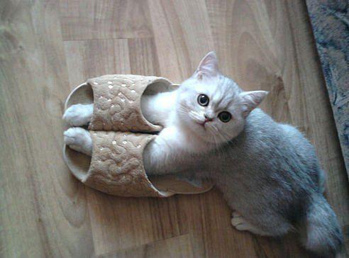 「#ネコ部」で投稿!大人女子にもおすすめ。通販で買える猫グッズの画像